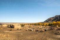 中国新疆地区的秋色