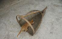 竹虹里的猫想吃鱼