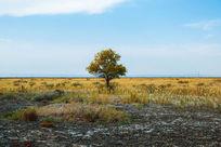 草原上的一棵树