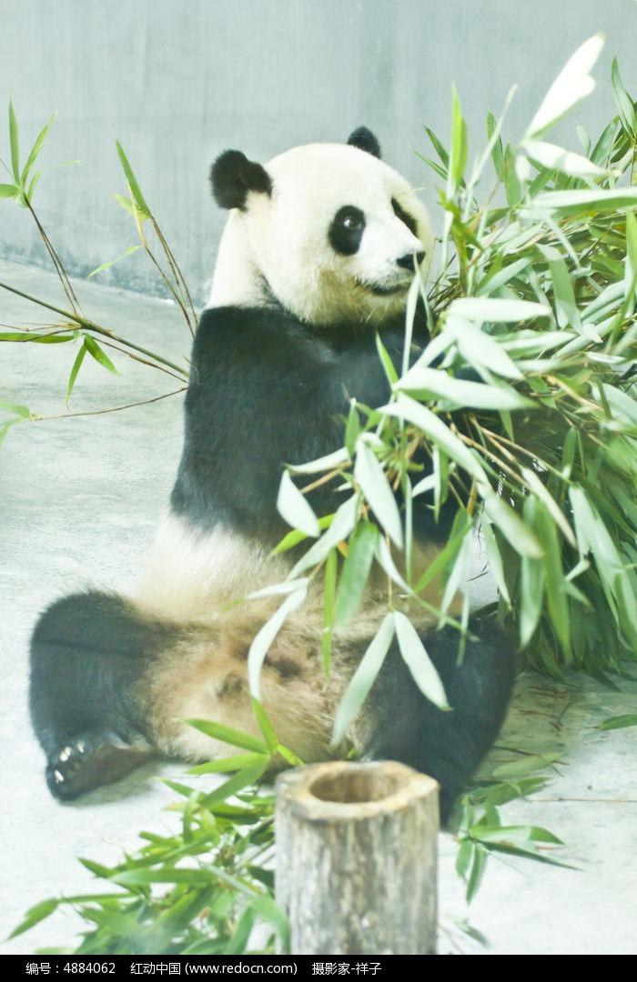 壁纸 大熊猫 动物 700_1080 竖版 竖屏 手机
