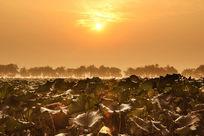 杭州西湖的日出