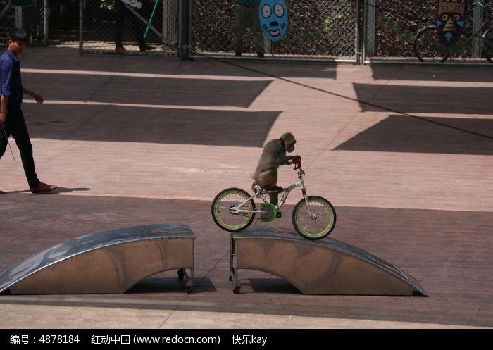 猴子骑自行车高清图片下载 编号4878184 红动网图片