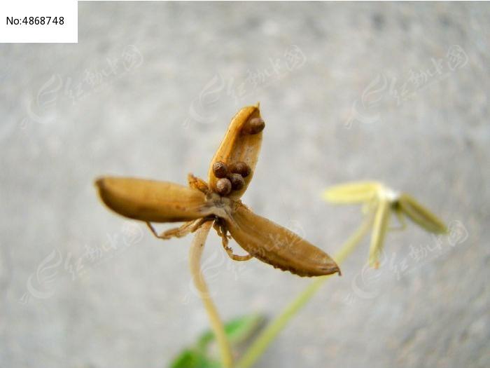 原创摄影图 动物植物 花卉花草 秋天结果的植物