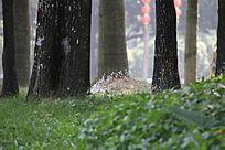 树间小喷泉