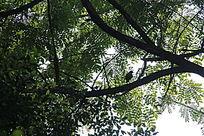 停靠树上的鸟影