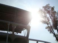 体育馆的一角树