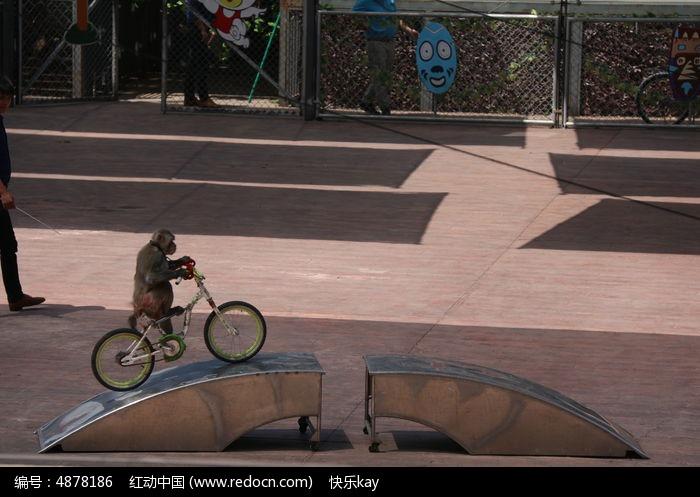小猴骑自行车高清图片下载 编号4878186 红动网图片