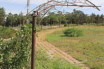 新农村一景图