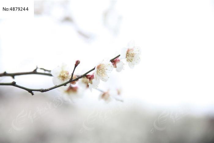 原创摄影图 动物植物 花卉花草 一支梅花