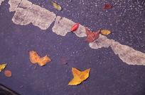 雨后秋天马路上的法国桐叶子