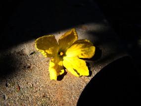 掉在地上的南瓜花