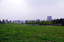 公园内绿色风景