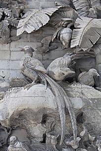 岩石上的长尾巴鸟