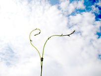 自然成优雅形状的绿藤