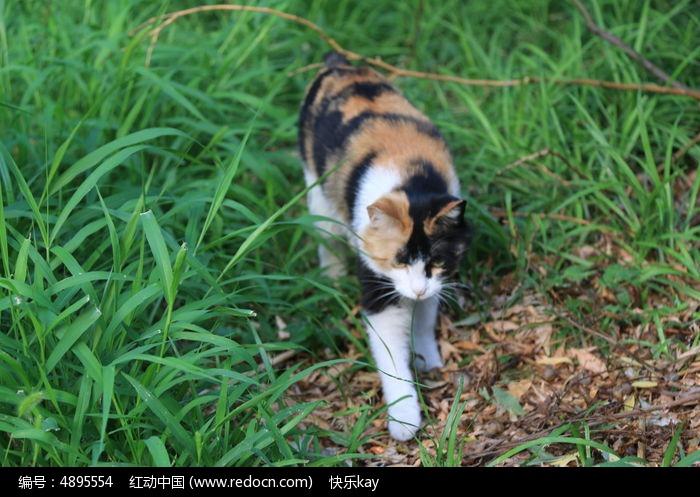 草丛中的花猫图片