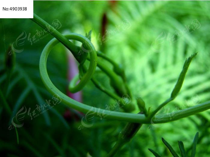 神奇宝贝叶藤蛇动态图片