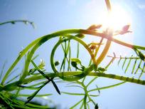 阳光里绿藤植物