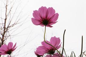 阳光下绽放过的美丽花朵