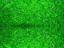 绿色背景墙