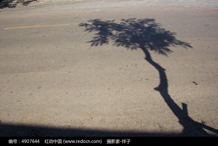 原创摄影图 动物植物 树木枝叶 树的影子