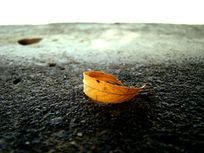 一片宁静的黄叶