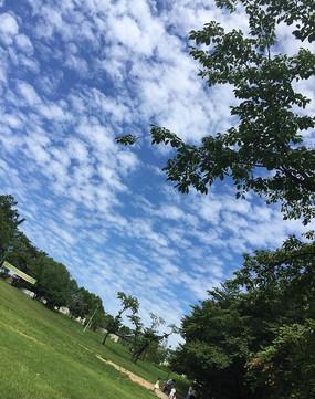 多云的树林