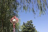 滨河的路灯图