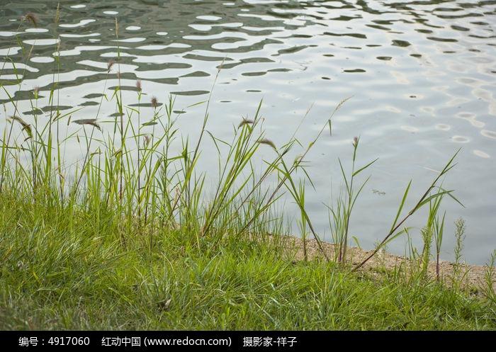 原创摄影图 动物植物 花卉花草 湖边的小草  请您分享: 红动网提供