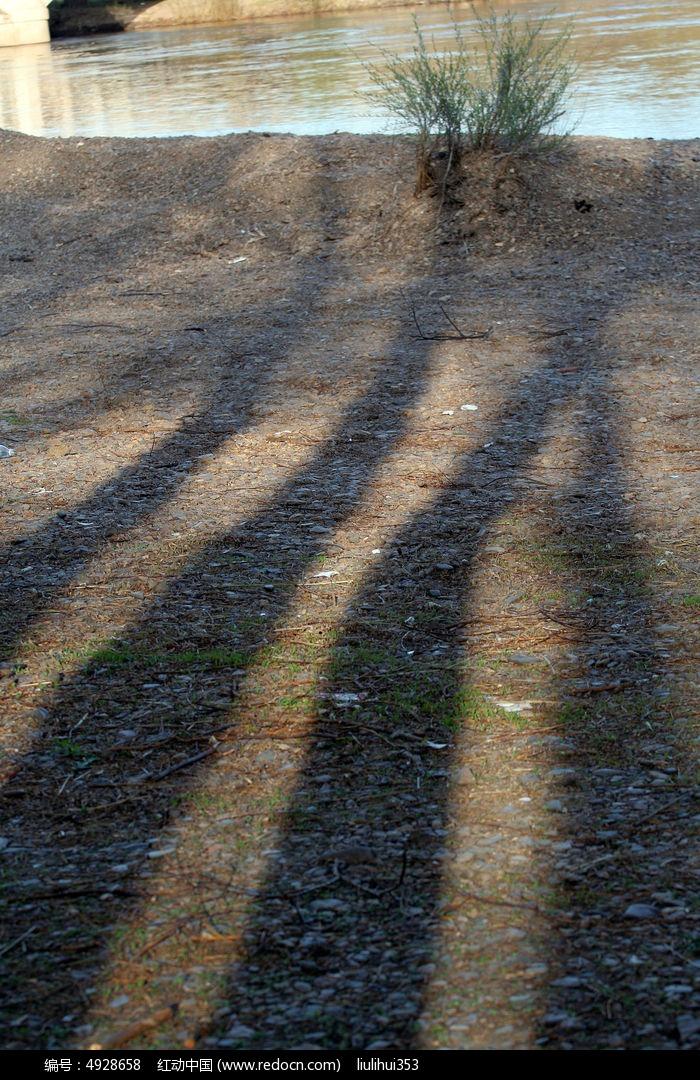 原创摄影图 动物植物 树木枝叶 树影子  请您分享: 红动网提供树木