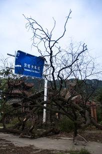 512地震遗址-倒在火车站标牌前的大树