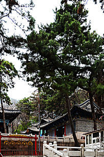 财神殿前的树和击钟