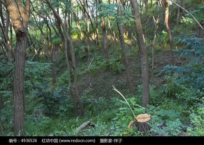 浮山树林图片,高清大图_城市风光素材