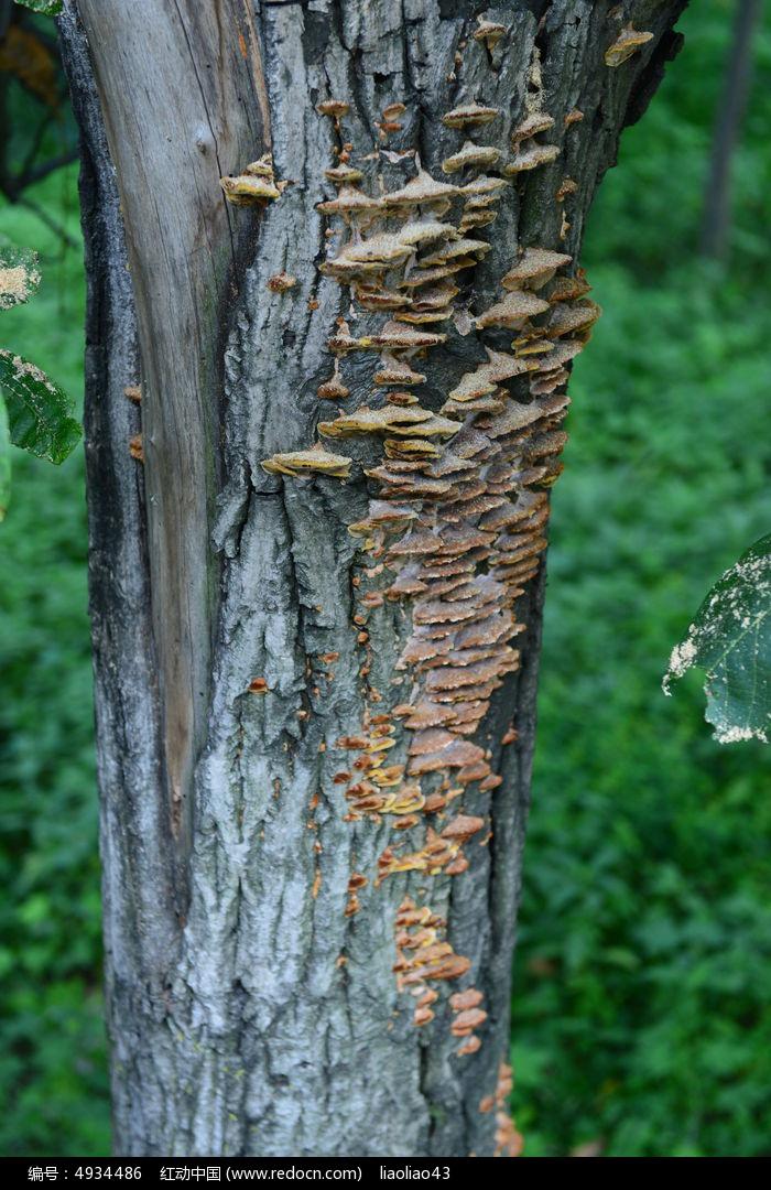 树干上的菌类图片,高清大图_树木枝叶素材