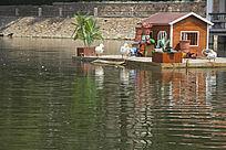 青岛北岭山湖里的鸭子