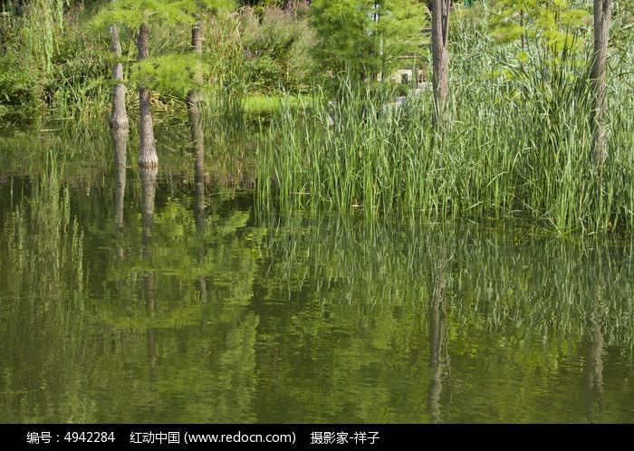 青岛李村公园的松树