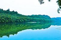 竹海大气简洁风景