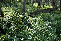 原始森林中的野花