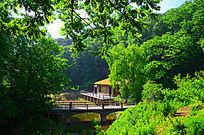 被树林包围着的水上房子与桥
