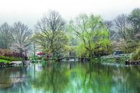 春天的杭州太子湾公园