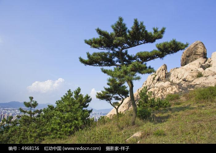 浮山的松树图片,高清大图_山峰山脉素材