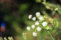 大山中的无名野花
