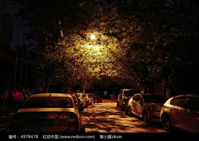 灯光下的梧桐树影图片