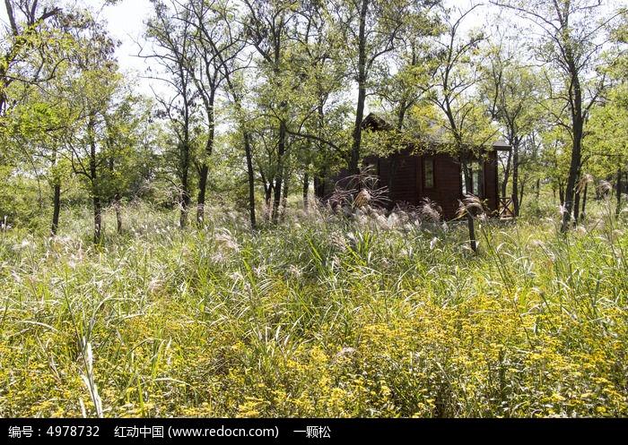 森林中的木屋图片