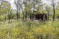 森林中的木屋