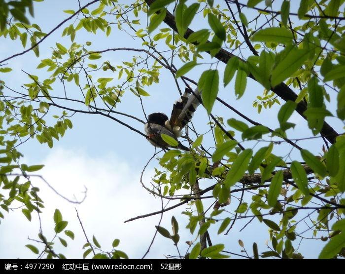 树林图片,高清大图_森林树林素材
