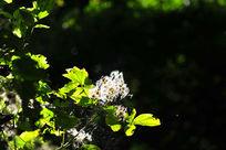 阳光下的无名花朵