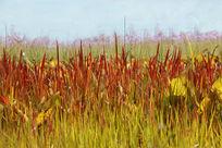 阳光下鲜红的小草