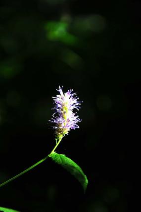 阳光下绽放的花