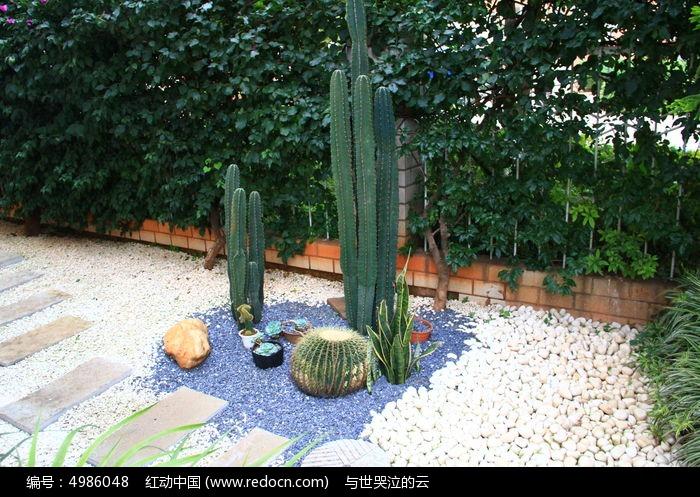 多肉植物搭配图片,高清大图