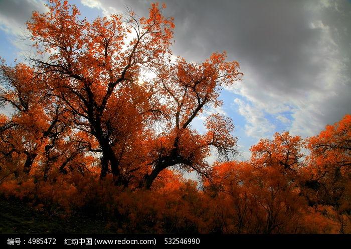 胡杨树图片,高清大图_森林树林素材